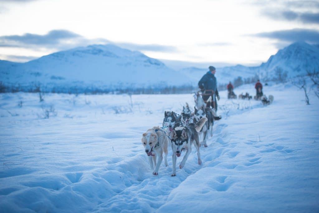 Dog Sledding in Winter wonderland with Arctic Adventure Tours, Tromsø, Norway